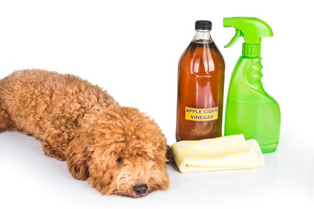 eliminate pet odor
