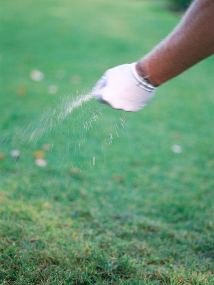 Huntsville Real Estate Blog How To Get A Lush Green Lawn